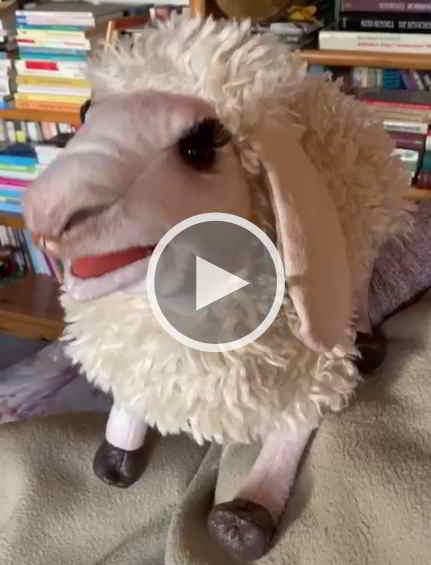 Kommentar vom Schaf